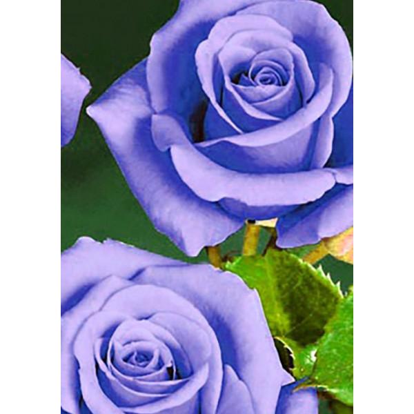 Роза чайно-гибридная Голубой нил